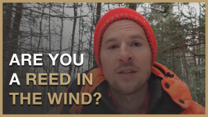 Lifestyle Creation : How to Never Be a Reed in The Wind